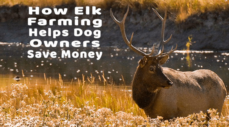 How Elk Farming Helps Dog Owners Save Money